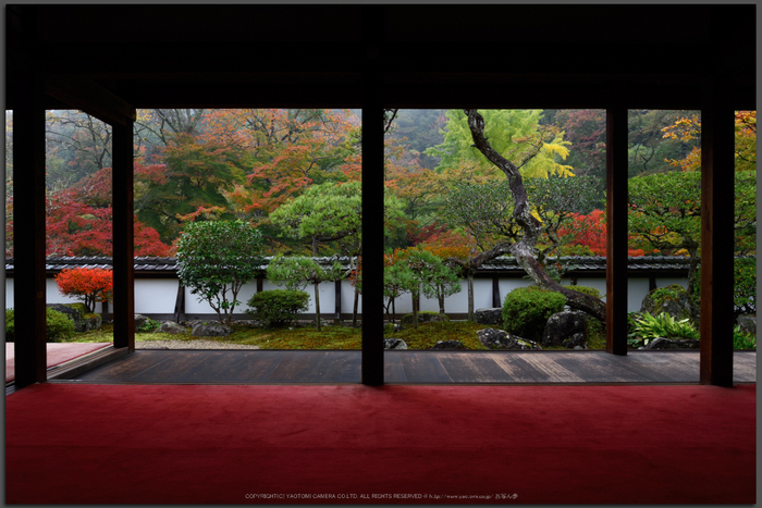 正暦寺,紅葉(DSC_0146,Top)2014yaotomi.jpg