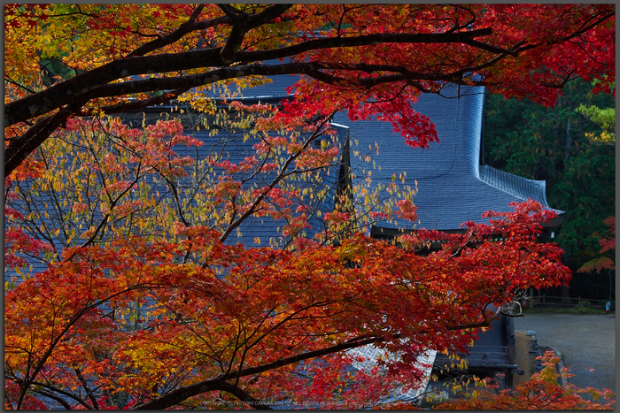 神護寺,紅葉(PB050060,40mm,F6.3,Top)2014yaotomi.jpg