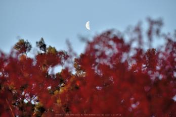 笠置寺,紅葉(DSC_0566,200mm,F5.6,D750)2014yaotomi.jpg
