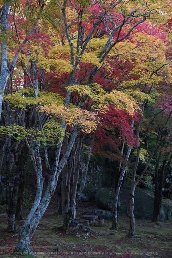 笠置寺,紅葉(DSC_0624,65mm,F8,D750)2014yaotomi.jpg