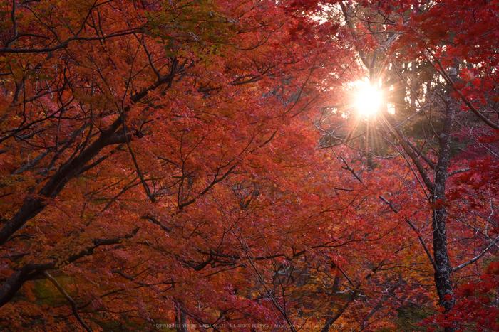 笠置寺,紅葉(DSC_0641,120mm,F16,D750)2014yaotomi.jpg