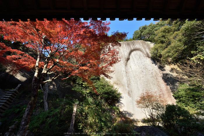 笠置寺,紅葉(DSC_0689,14mm,F11,D750)2014yaotomi.jpg