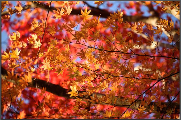 笠置寺,紅葉(DSC_0746,Top)2014yaotomi.jpg