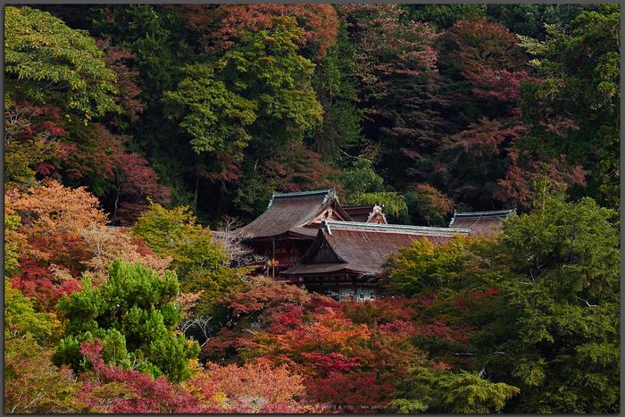 談山神社,紅葉(PB080374,Top)2014yaotomi.jpg