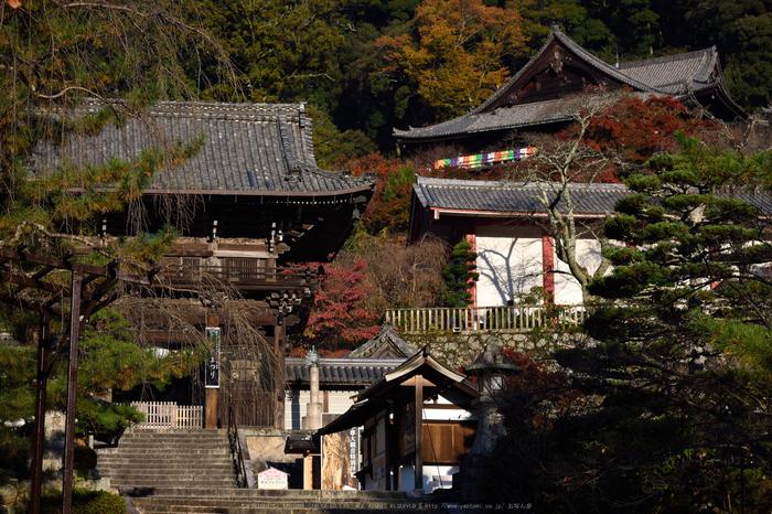 長谷寺,紅葉(DSC_0994,92mm,F6.3,D750)2014yaotomi.jpg