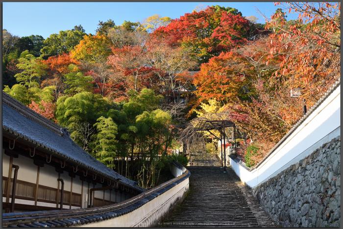 長谷寺,紅葉(DSC_1004,Top)2014yaotomi.jpg