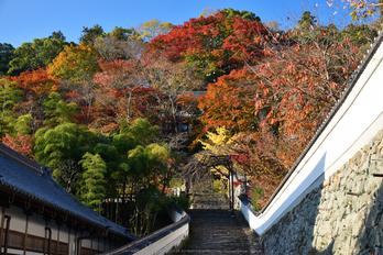 長谷寺,紅葉(DSC_1008,F6.3,50mm,D750)2014yaotomi_.jpg