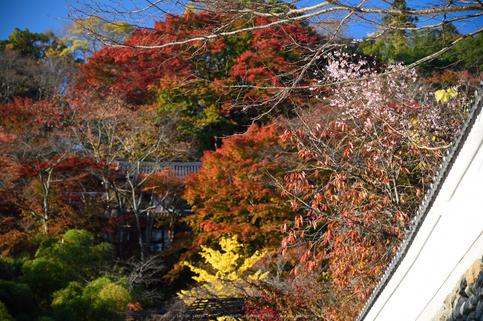 長谷寺,紅葉(DSC_1015,82mm,F4.5,D750)2014yaotomi.jpg