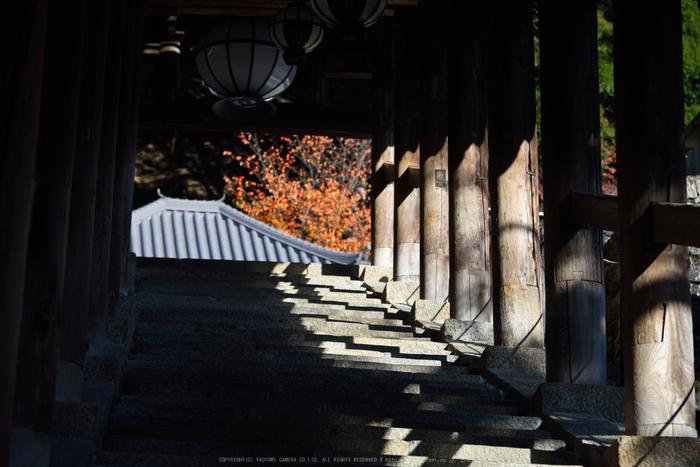 長谷寺,紅葉(DSC_1063,120mm,F5,D750)2014yaotomi.jpg