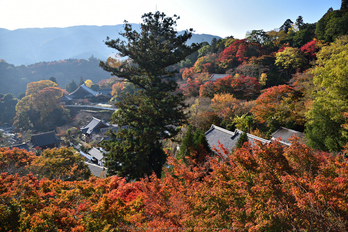 長谷寺,紅葉(DSC_1111,F6.3,24mm,D750)2014yaotomi_.jpg