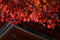 長谷寺,紅葉(DSC_1161,86mm,F6.3,FULL)2014yaotomi.jpg