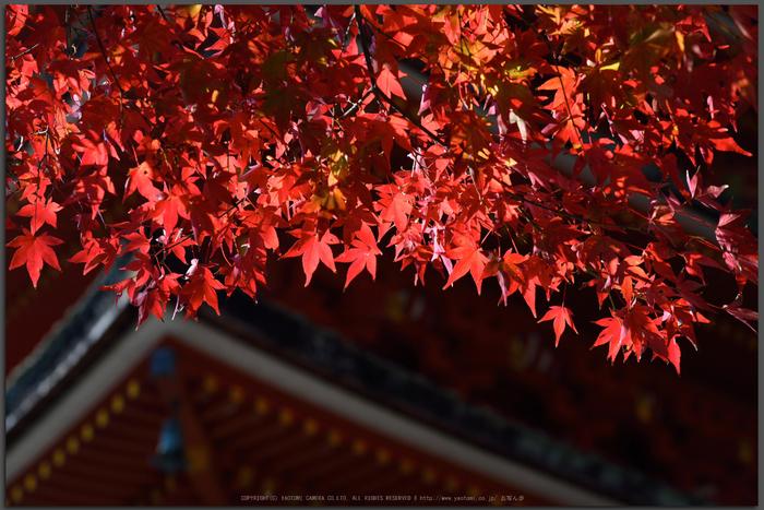 長谷寺,紅葉(DSC_1161,Top)2014yaotomi.jpg