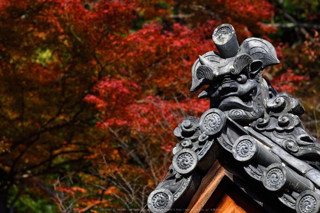 長谷寺,紅葉(DSC_1162,200mm,F6.3,D750)2014yaotomi.jpg