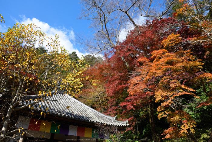 長谷寺,紅葉(DSC_1216,24mm,F7.1,D750)2014yaotomi.jpg