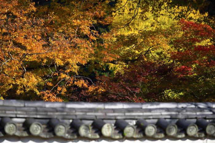 長谷寺,紅葉(DSC_1254,175mm,F5,D750)2014yaotomi.jpg