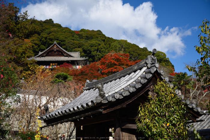 長谷寺,紅葉(DSC_1296,48mm,F4,D750)2014yaotomi.jpg