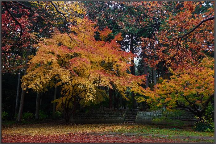 九品寺・紅葉(PB290073,Top)2014yaotomi_.jpg