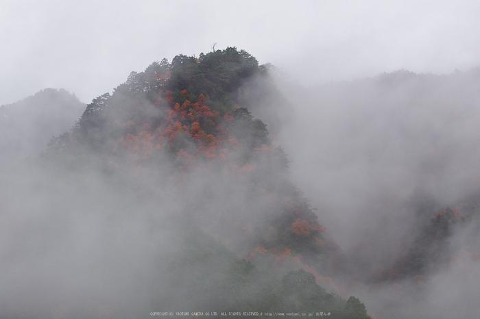 室生寺・紅葉(PB260020,46mm,F4,EM1)2014yaotomi_.jpg