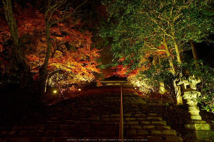 室生寺・紅葉(PB260136,12mm,F8,EM1)2014yaotomi_.jpg