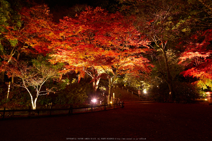 室生寺・紅葉(PB260148,12mm,F8,EM1)2014yaotomi_s.jpg