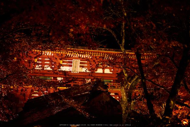室生寺・紅葉(PB260156,40mm,F2.8,EM1)2014yaotomi_ (1) .jpg