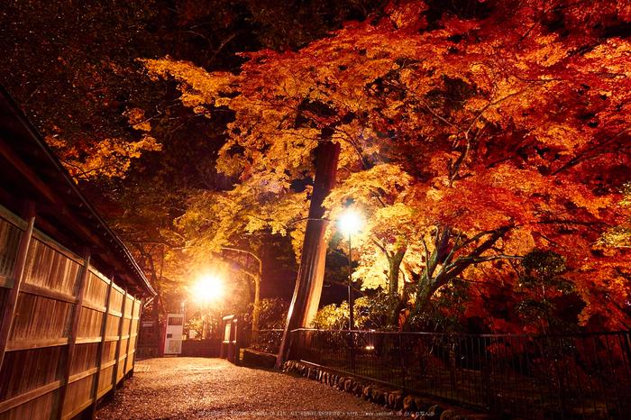 室生寺・紅葉(PB260158,12mm,F8,EM1)2014yaotomi_ (1) .jpg