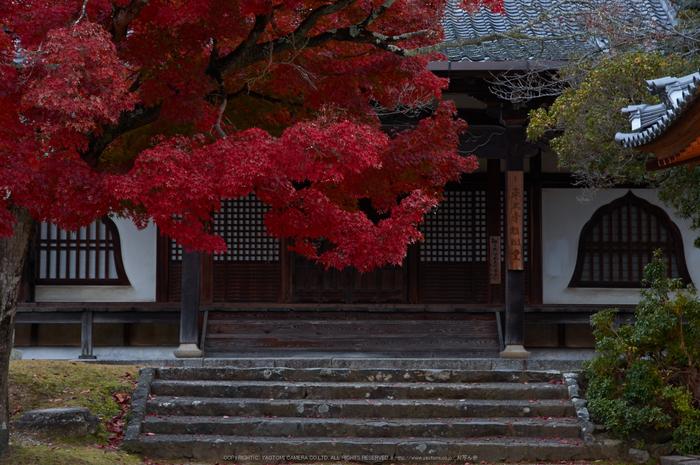 東大寺・紅葉(PK3_0220,60mm,F8,K3)2014yaotomi_.jpg