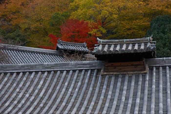 東大寺・紅葉(PK3_0258,85mm,F6.3,K3)2014yaotomi_.jpg