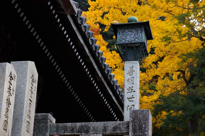 東大寺・紅葉(PK3_0280,85mm,F6.3,K3)2014yaotomi_.jpg