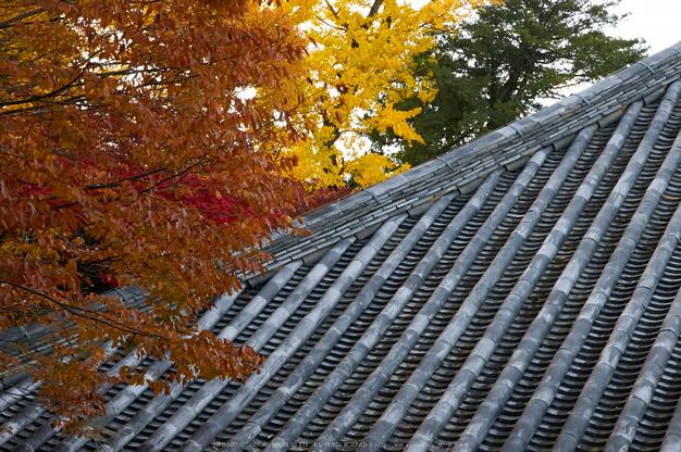 東大寺・紅葉(PK3_0293,60mm,F9,K3)2014yaotomi_.jpg