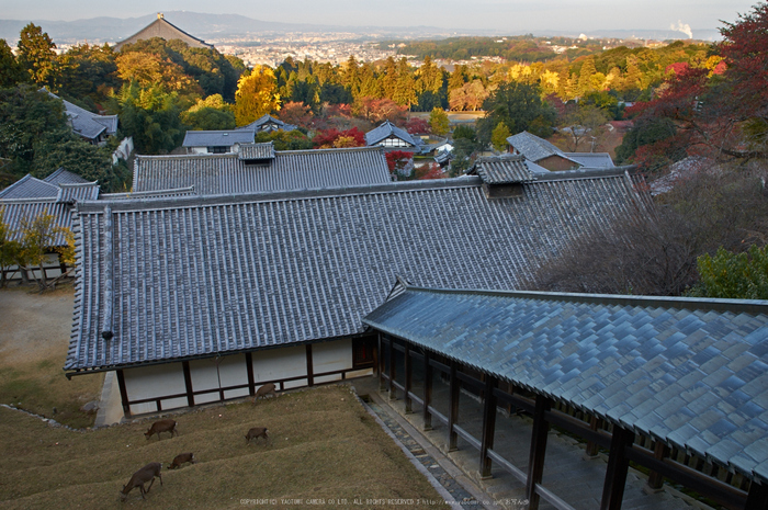 東大寺・紅葉(PK3_0315,18mm,F9,K3)2014yaotomi_.jpg