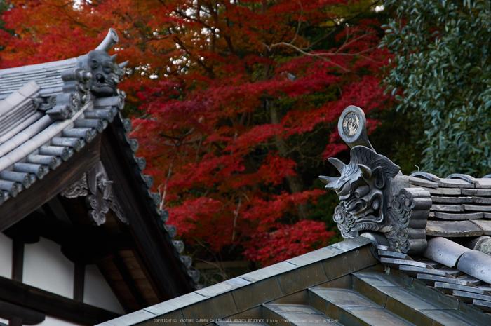 東大寺・紅葉(PK3_0322,85mm,F5.6,K3)2014yaotomi_.jpg