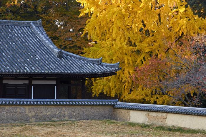 東大寺・紅葉(PK3_0335,68mm,F9,K3)2014yaotomi_.jpg