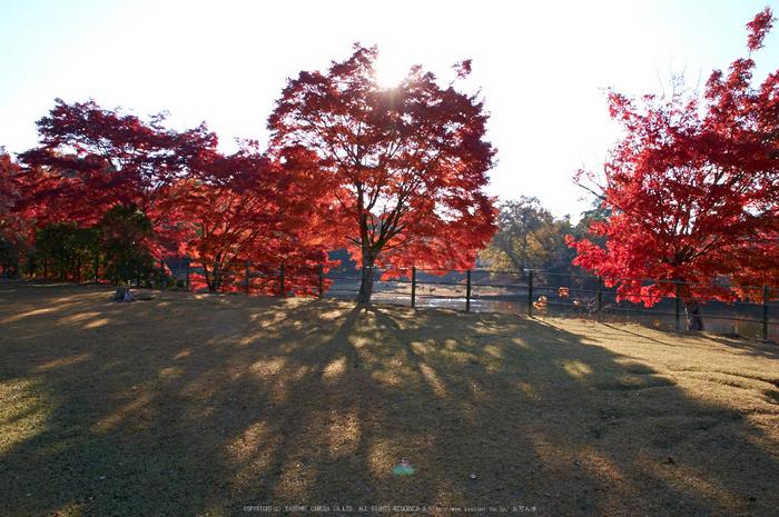 東大寺・紅葉(PK3_0492,16mm,F11,K3)2014yaotomi_.jpg