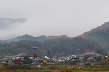 西南院・紅葉(PB290005,57mm,F4.5,EM1)2014yaotomi_.jpg