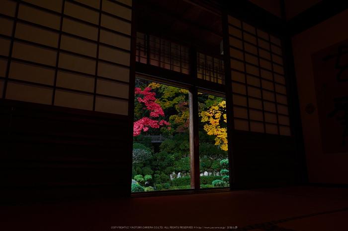 西南院・紅葉(PB290175,12mm,F7.1,EM1)2014yaotomi_.jpg