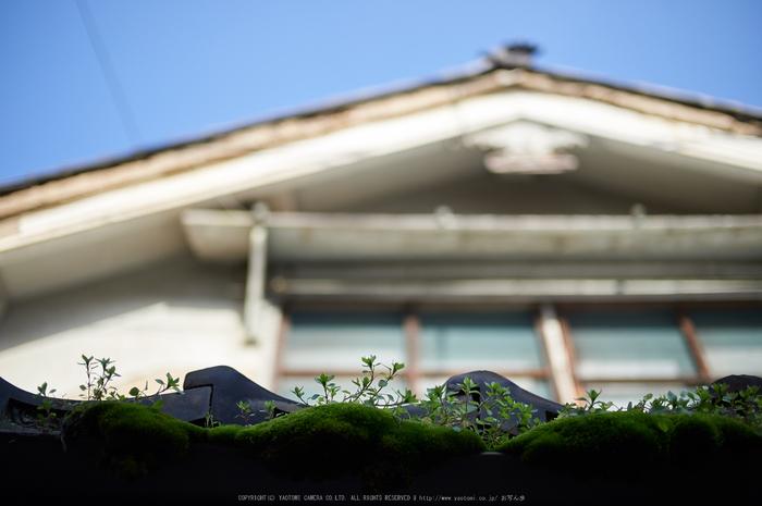 奈良,今井町,冬晴れ(DSC_4986,40 mm,f-2,Df)2015yaotomi_.jpg