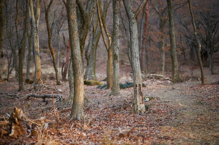 曽爾,屏風岩公苑,冬(DSC_4878,100 mm,f-2,Df)2015yaotomi_.jpg