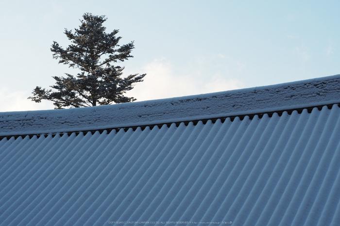 京都,神護寺,雪景(P2140386,42 mm,f-8,EM5II)2015yaotomi_.jpg