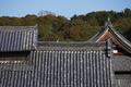 京都,萬福寺,冬(P1000100,88 mm,f-5.6,GF7)2015yaotomi_.jpg