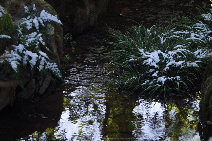 京都,龍安寺,雪景(P2140529,75 mm,f-6.3,EM5II)2015yaotomi_.jpg