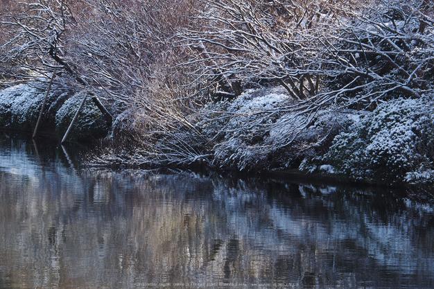 京都,龍安寺,雪景(P2140538,90 mm,f-8,EM5II)2015yaotomi_a.jpg