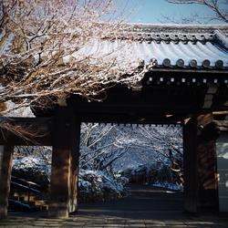 京都,龍安寺,雪景_2015yaotomi_01.jpg