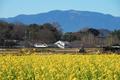 奈良,明日香,小春日和(P2210014,75 mm,f-5.6,FULL)2015yaotomi_.jpg