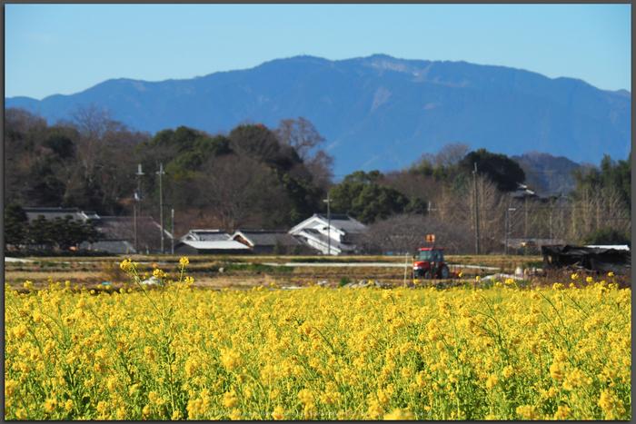 奈良,明日香,小春日和(P2210014,Top)2015yaotomi_.jpg