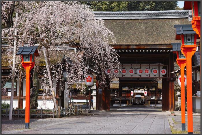 京都,平野神社,しだれ桜(DP3Q0595,4,50-mm,Top)2015yaotomi_-1.jpg