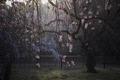 京都御苑,近衛邸跡(DP3Q0510,2.8,FULL)2015yaotomi.jpg