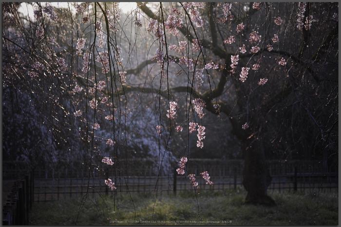 京都御苑,近衛邸跡(DP3Q0510,2.8,Top)2015yaotomi.jpg