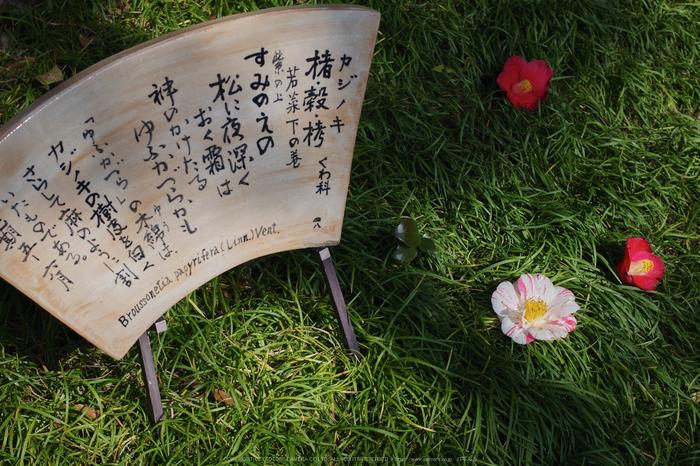 城南宮,梅花(KS2_1011,50 mm,f-6.3,KS2)2015yaotomi_.jpg