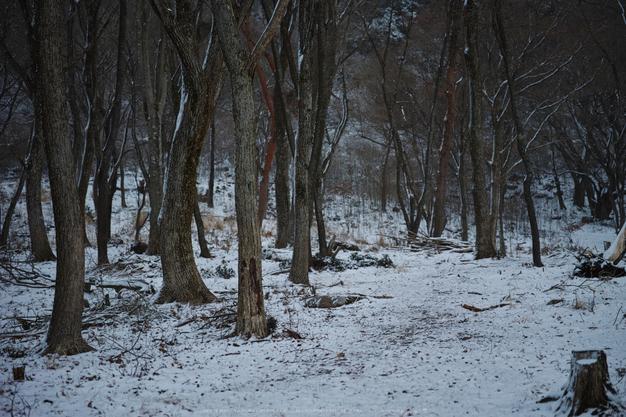 曽爾,屏風岩公苑,雪景(DP3Q0023,f-2.8,dp3Q)2015yaotomi_.jpg